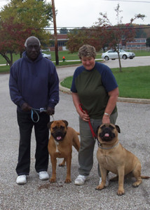 Two Bull Mastiffs to be blessed.